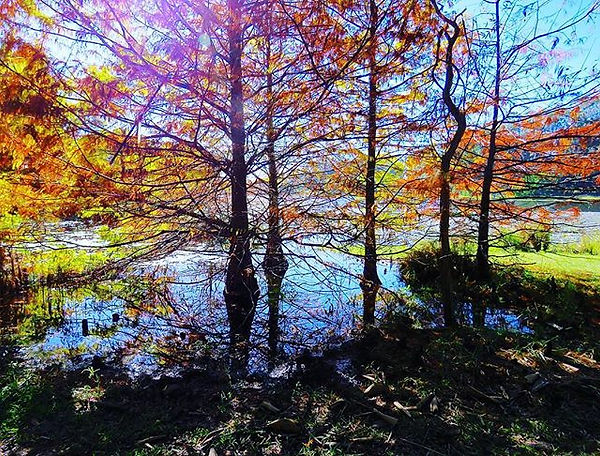 Lake MacDonald_#cooroy #queensland #autu