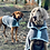 Thumbnail: Henry Wag Microfibre Drying Coat - Extra Large