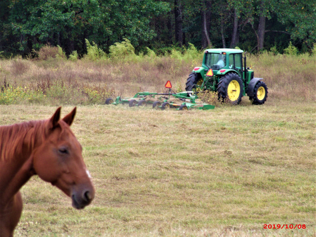 Farm Pictures (52).JPG