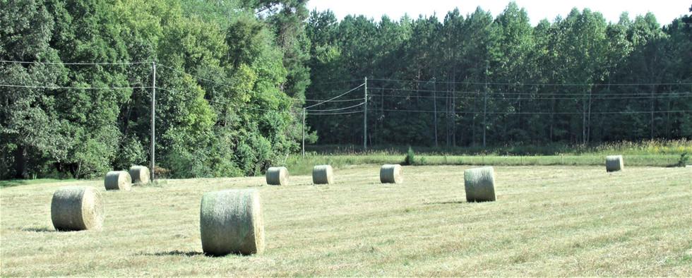 Farm Pictures (18).JPG