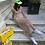 Thumbnail: Blush Maxi Dress