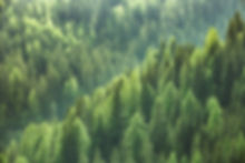 evergreen forest.jpg
