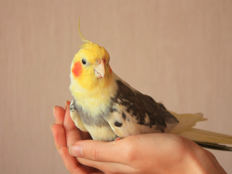 Relationship Games for you and your parrot!