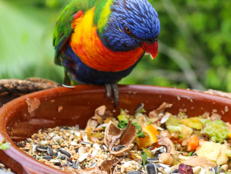 Help...my parrot keeps flipping the bowl!