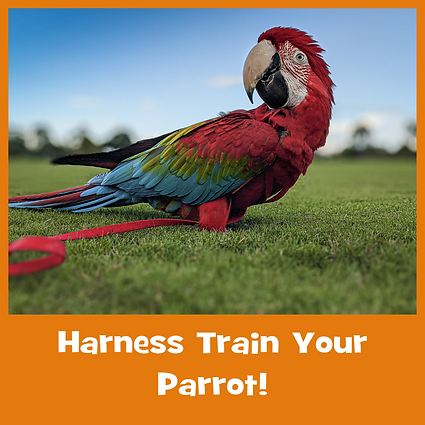 Harness Train Your Parrot! Course Files
