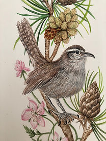 Beswickwrendetail.jpg