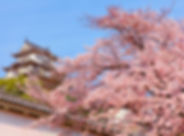 cerejeiras-no-japao-750x499.jpg