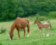 Paarden en wellness vakantieweken