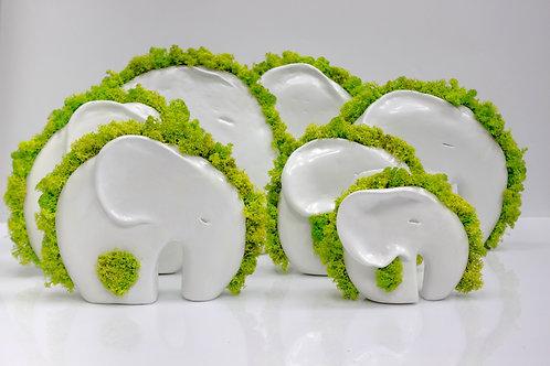 Семья семи слонов