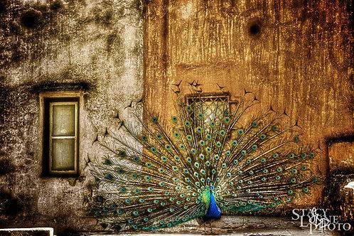Castle Peacock
