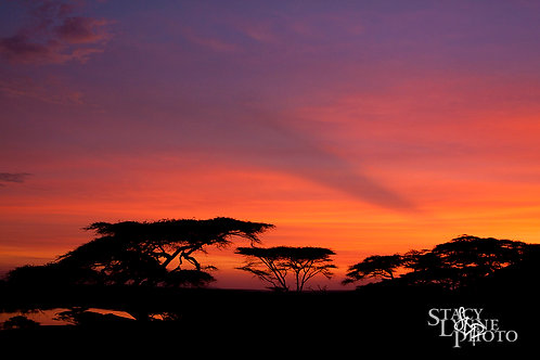 Morning on the Serengeti