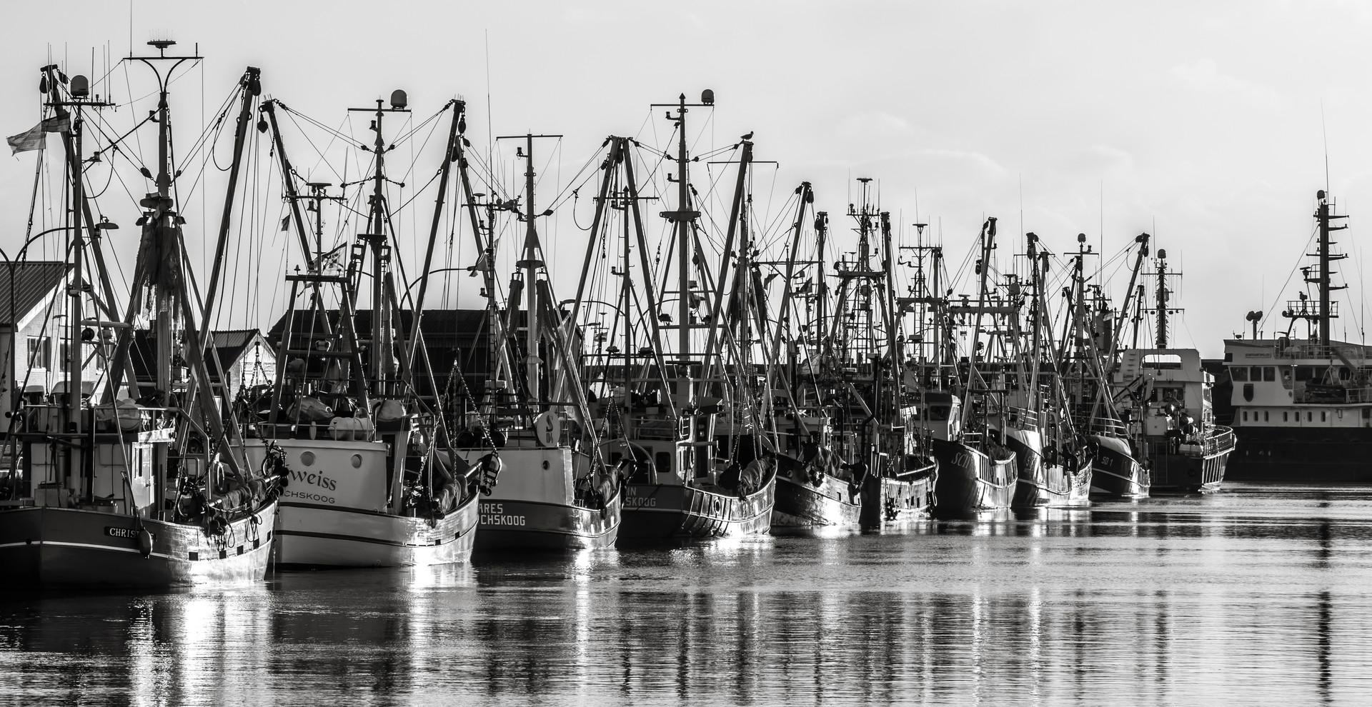 Die Flotte im Hafen