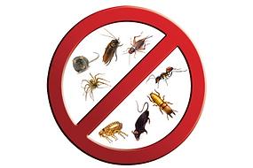 anti pest control pesticiden ongedierte bestrijden tegen larven container ratten muizen mieren kakkerlakken, mijt, spinnen