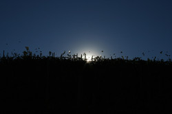tramonto in vigna