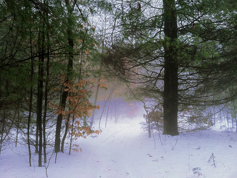 Before the Clearing - Winter