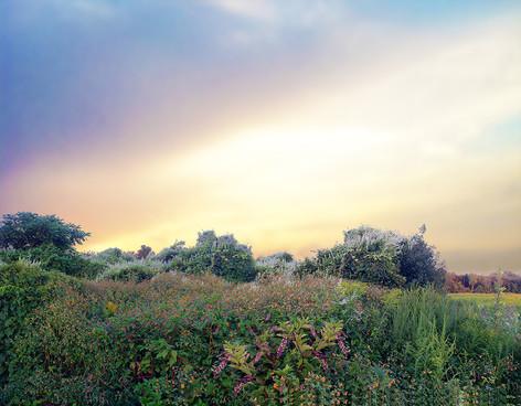 Weeds of Eden IV