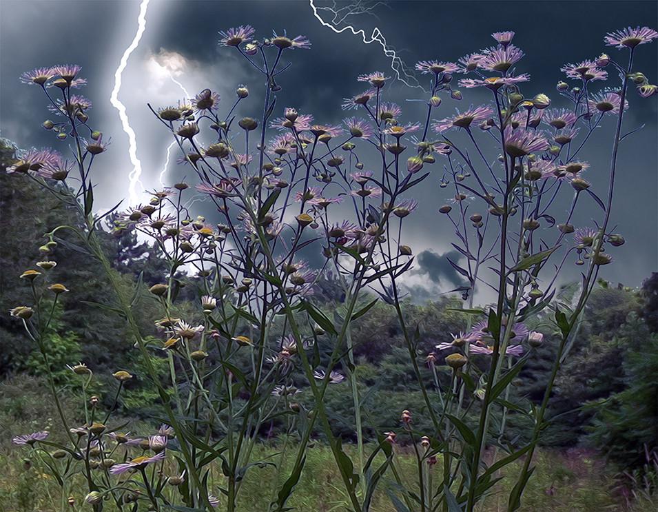 Wild Daisies In Storm II