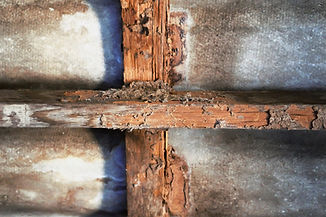 house-construction-with-termites-damage.