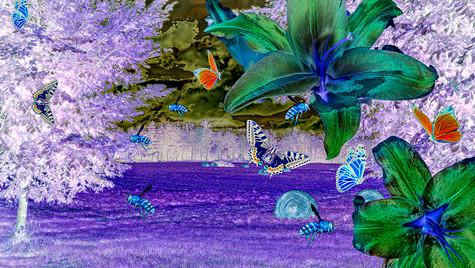 Lillies & Butterflies