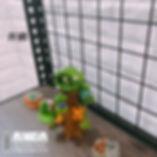 井網.jpg