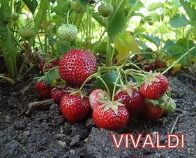 Vivaldi.jpg