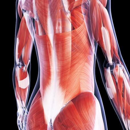 L'importance des fascias dans la prise en charge ostéopathie