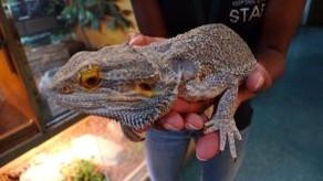 Star Eco Station: Environmental Science Museum & Exotic Wildlife Rescue Facility - Culver City, CA