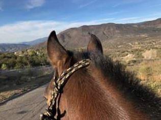 Horseback Riding Instruction - Valley Center, CA