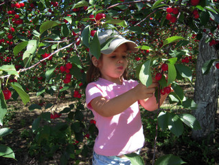 Cherry Picking with Inspire Friends