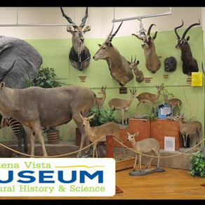 Family Day Discounted Admission - Bakersfield, CA