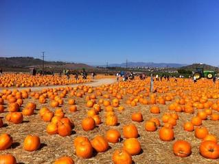 * Closed * Underwood Farms Pumpkin Patch - Moorpark
