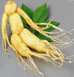 Stress et plantes adaptogènes Le ginseng