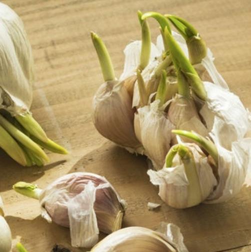 L'ail c'est délicieux, bon marché, et améliore considérablement votre santé !
