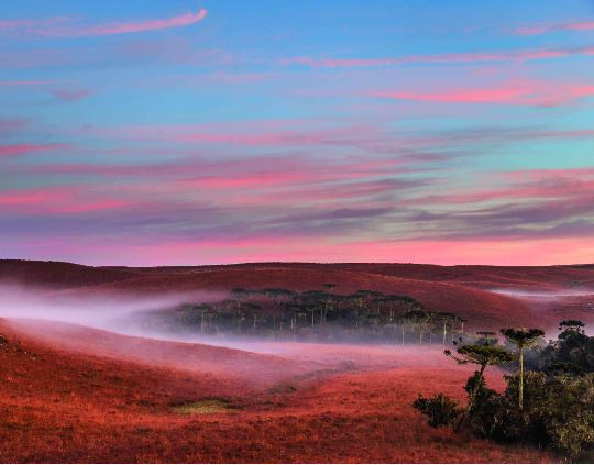 Neblina ao amanhecer da região