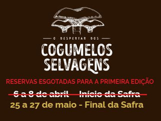 O Despertar dos Cogumelos Selvagens - Final da Safra!
