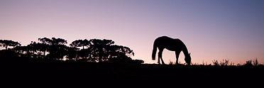 Passeio à Cavalo