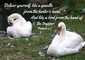 Proverbs 6:5