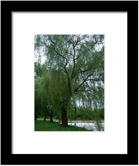 Weeping Willow at Wehr's Bridge