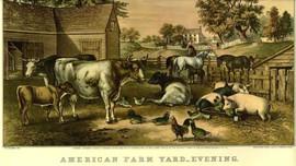 AMERICAN FARM YARD EVENING