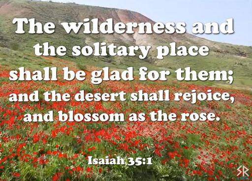 Rare Desert Flower Blossom in Israel by the Dead Sea