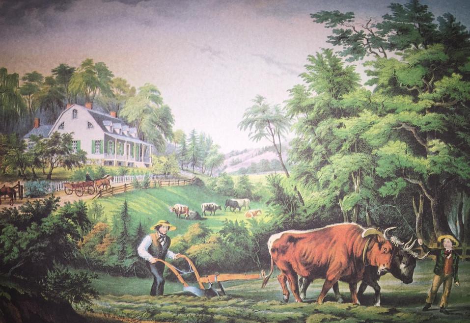 AMERICAN FARM SCENES #1