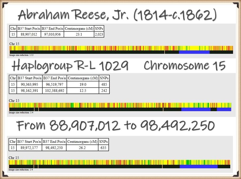 Abraham Reese Jr on Chromosome 15