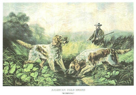 AMERICAN FIELD SPORTS - RETRIEVING