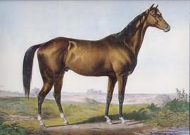 THE CELEBRATED HORSE LEXINGTON