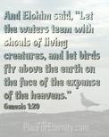 Genesis 1:20