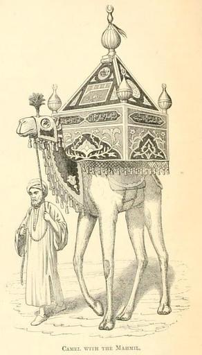 Camel with mahmel
