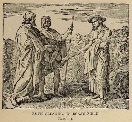 Ruth gleaning in Boaz's field