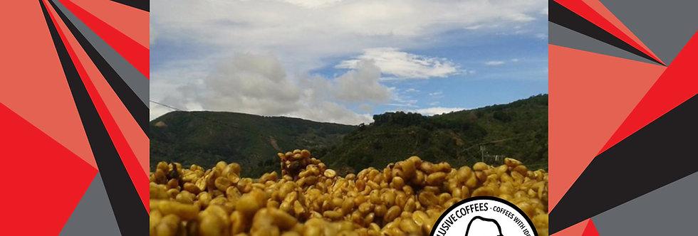 Costa Rica Yellow Honey Geisha