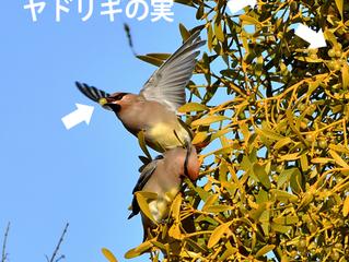 鳥撮りのお客さん