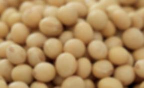 国産大豆豆腐アイス